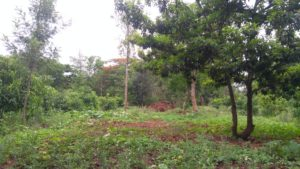 chikmagalur farmland for sale-min