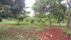 chikmagalur residential plot for sale-min