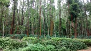 coffee estate plots in chikmagalur