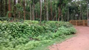 coffee plantation residential plot in chikmagalur