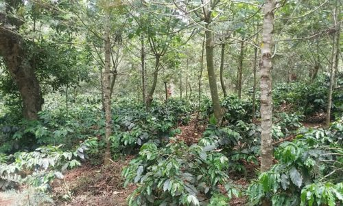 coffee plantations for sale chikmagalur