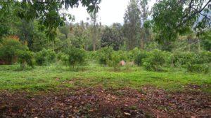 farm plot for sale chikmagalur-min