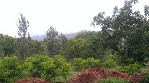 land for sale kemmanagundi chikmagalur-min