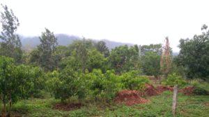 plot for sale in kemmanagundi chikmagalur-min