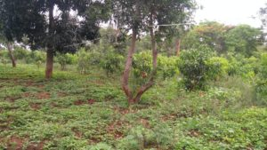 residential land for sale chikmagalur-min