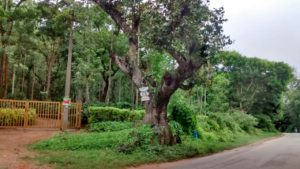 residential plot in coffee plantation in chikmagalur