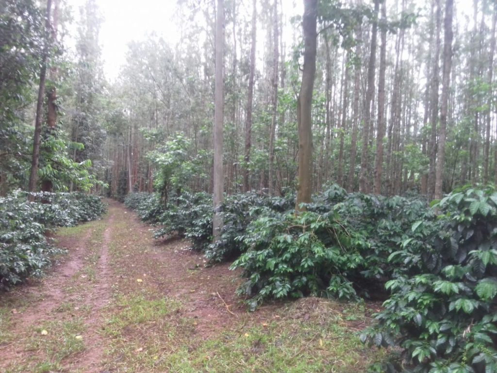 chikmagalur coffee plantation & estate sale